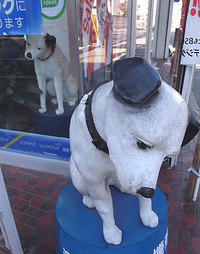 Dolldog